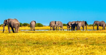 Your African Adventure Begins With London Jet Charter!